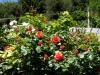 Gartenkultur in Grissian