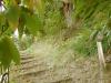 Kastanienerlebnisweg in Voellan
