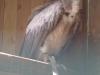 Vogelschau