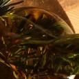 Man sagt, dass der Gebrauch eines Kochlöffels aus Rosmarinholz die Verdauung der damit umgerührten Speisen fördere. Rosmarinstrauch: In alten Zeiten war es Brauch einen Rosmarinkranz als Brautkranz zu tragen, dem […]