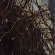 (Zutaten für 40 bis 50 Stück) 400g Nougat 150g Marzipanrohmasse 50g gemahlene Pistazien 1 cl Likör ( z.B. Pfefferminz- Aprikosen- Kirschlikör) Für den Überzug: ca. 250g dunkle und 250g helle […]
