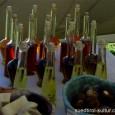 (Einfach und unkompliziert ist seine Zubereitung) Zutaten: 1 kg frische Himbeeren ca. 1 lt. Rotwein ½ Zimtstange 1 EL Himbeersirup 1 kg Zucker Die Zubereitung: Geben sie die Himbeeren in […]