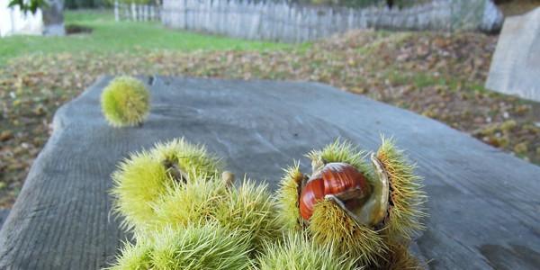 Auf dem Kastanienerlebnisweg in Völlan oberhalb von Lana erfährt man viel aufschlussreiches über diese köstliche Herbstfrucht. Ungefähr 2 km verläuft der kinderfreundliche Rundumweg entlang einiger beeindruckenden Kastanienhainen.